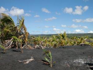The lava field at Kaimū